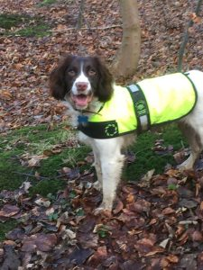 Dog in high visibility coat